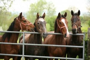 Horseproperties