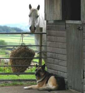 horse and shepard