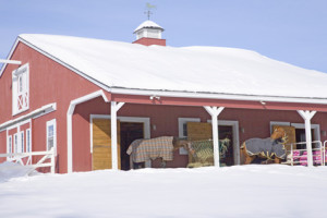 Horses with blankets in Red Barn in snow, Ma., New England, USA