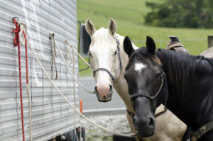 Contagious Disease Prevention When Travelling With Your Horse