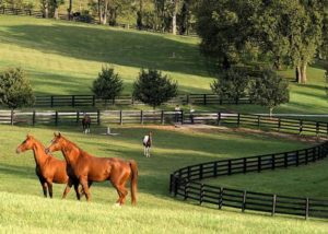 How to keep the pastures alive