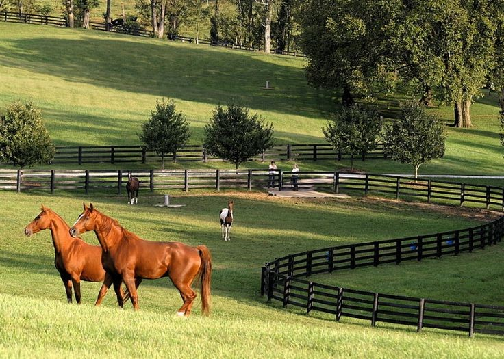 Small Horse Properties For Sale Lexington Ky